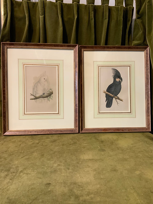 Hand colored prints etchings of cockatoos from the XIX century.