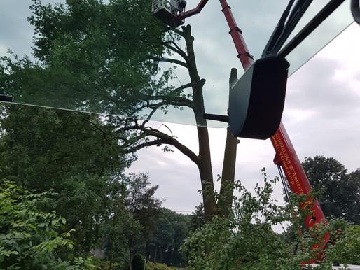 Krandienst Kranverleih Kranvermietung  Autokrane Mobilkrane Baumfällungen