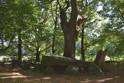 Großsteingräber