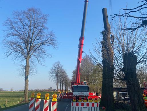 Krandienst Kranvermietung Kranverleih Baumfällungen Autokran Arbeitsbühnen in Neuenkirchen-Vörden