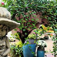 VISBEK macht Herbst Dekorationen - Blumen Westermann🍂🍁🍄 Der Herbst ist da!🍂🍄 Und Blumen Westermann hat für euch die passenden Dekorationen, um Haus und Garten in einem tollen herbstlichen Glanz erstrahlen zu lassen.✨ Von Türkränzen bis Stauden hat das Westermann Team alles parat☝️  Schaut doch vorbei und lasst euch inspirieren 🍁🍂🍄 😉