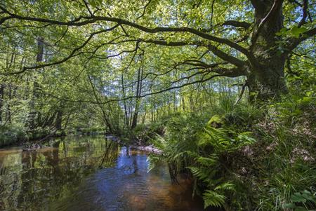 Bäken der Endeler und Holzhauser Heide mit Aue
