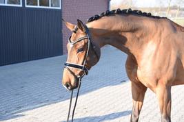 Pferdeschur