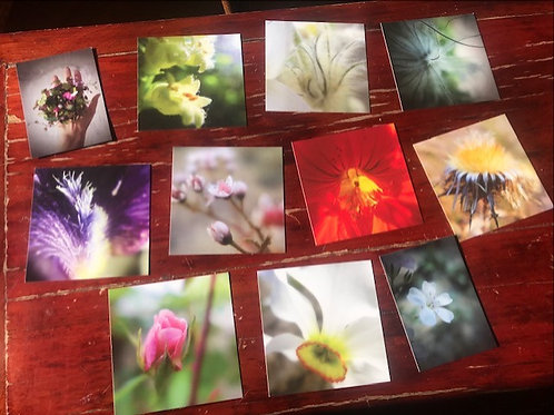 """Lot de 11 cartes postales """"Lumière"""""""