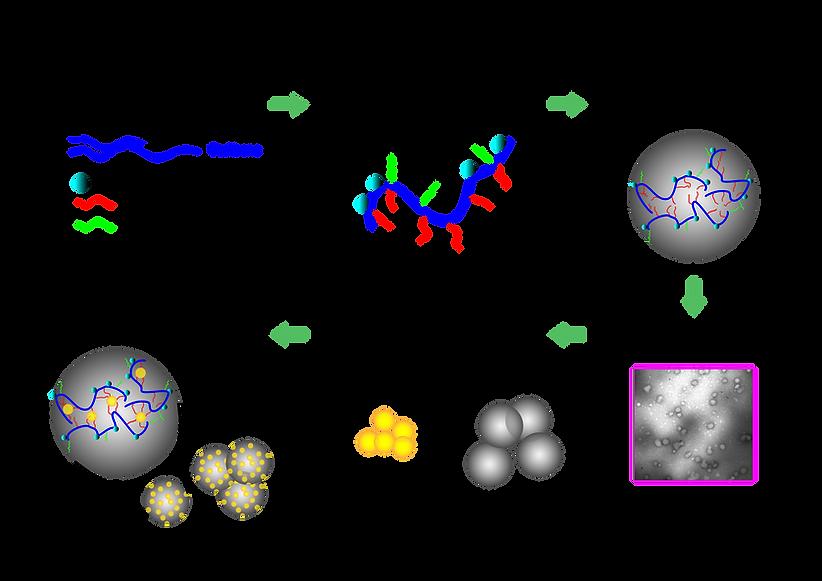 MET Supramolecular Assemblies -01.png