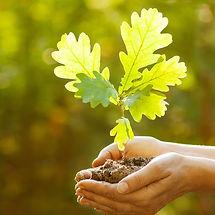 Roots Oak.jpg