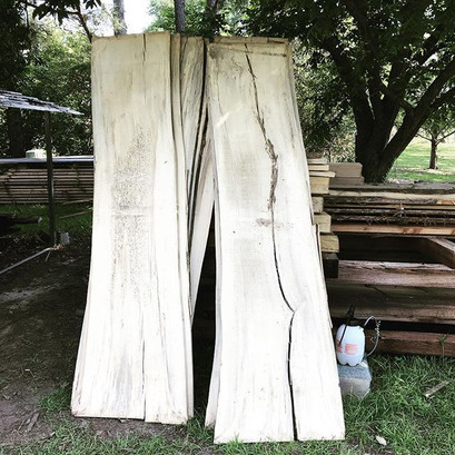 Fished out these Spalted Beech Slabs fro
