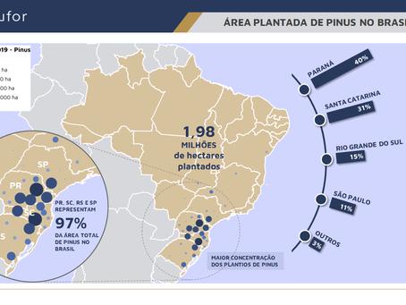 ÁREA PLANTADA DE PINUS NO BRASIL (2019)