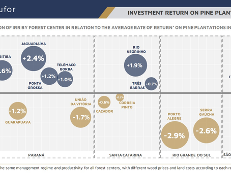 Investment Return on Pine Plantations