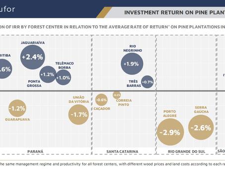 Investment Return on Pine Plantations