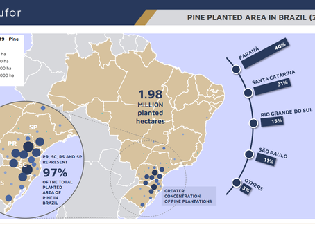PINE PLANTED AREA IN BRAZIL (2019)
