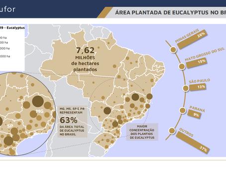 ÁREA PLANTADA DE EUCALYPTUS NO BRASIL (2019)