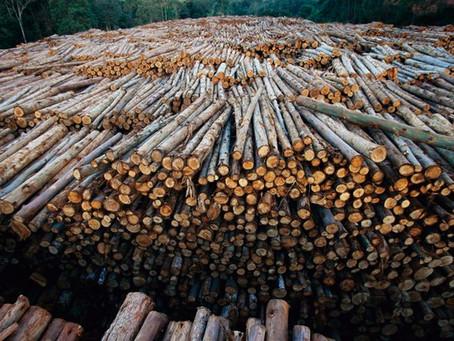 BTG Pactual faz nova aposta de R$ 750 milhões para investir em florestas