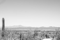 Tucson-Suguaro2