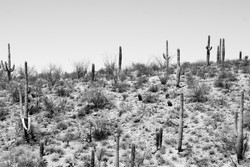 Tucson-Saguaro
