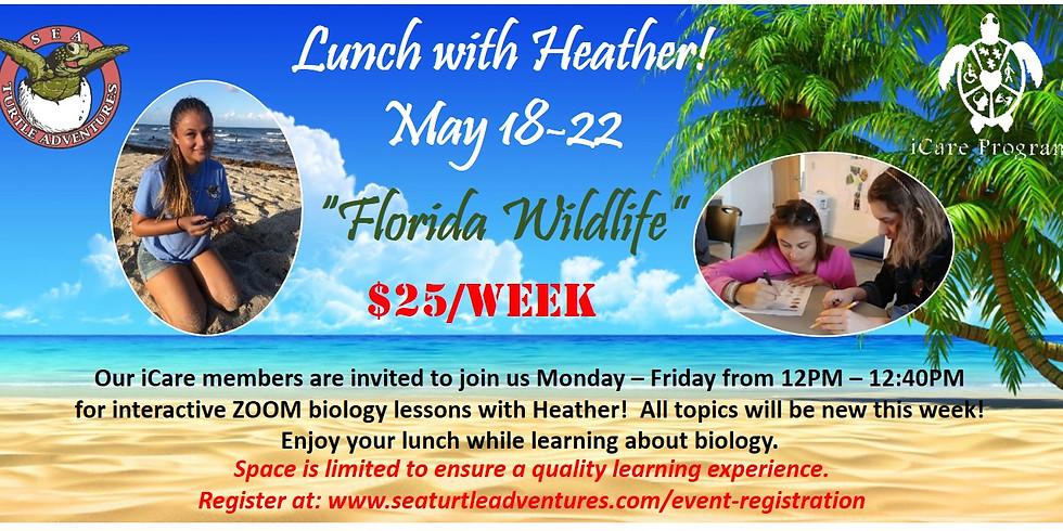 Lunch with Heather! Week 2: Florida Wildlife