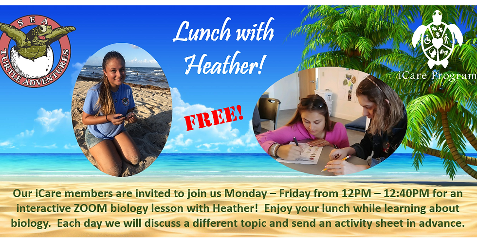Lunch with Heather: Tuesday: All about Seashells!