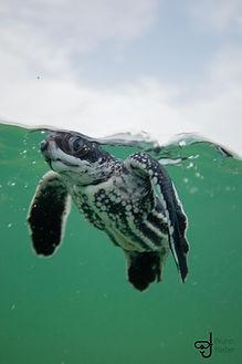 turtle 1.jpeg