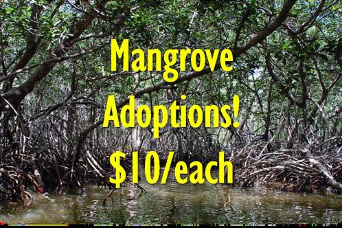 Mangrove Adoption