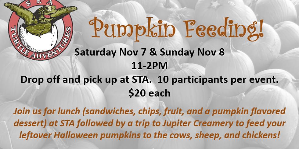 Pumpkin Feeding! Sat Nov 7