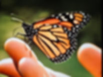 butterfly picture.JPG