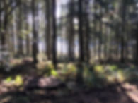 Pollys woodland picture.JPG