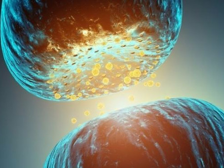 Hisslərimizin keşikçiləri -Neyromediatorlar