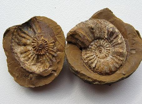Bitki və heyvan qalıqlarının yaşı necə müəyyən olunur ?