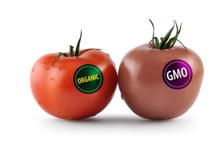 Genetik modifikasiya nədir və niyə tətbiq olunur ?