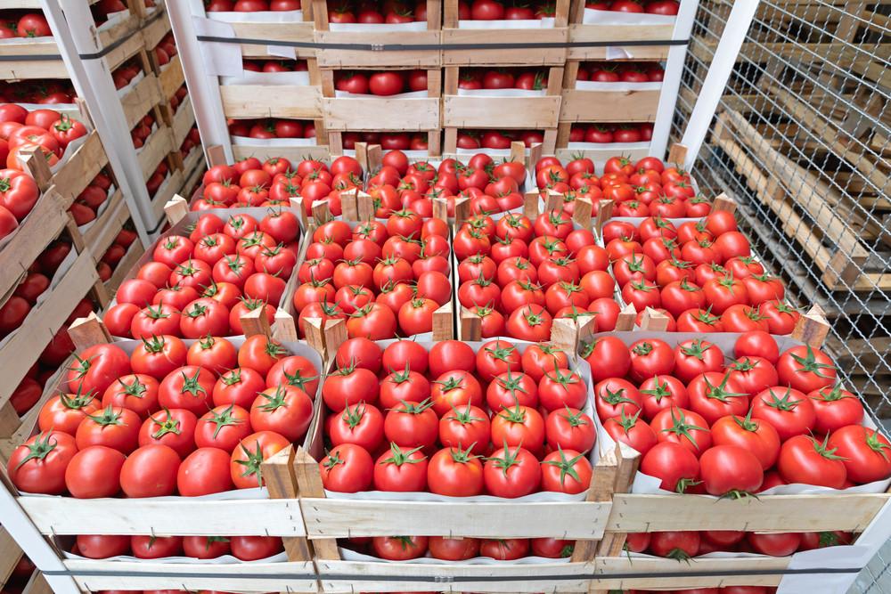 Cà chua được lưu trữ ở trong kho