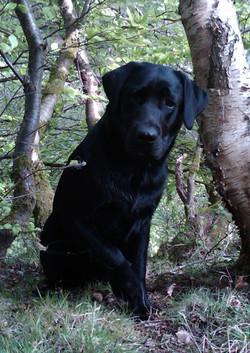 Isla Bear in the woods