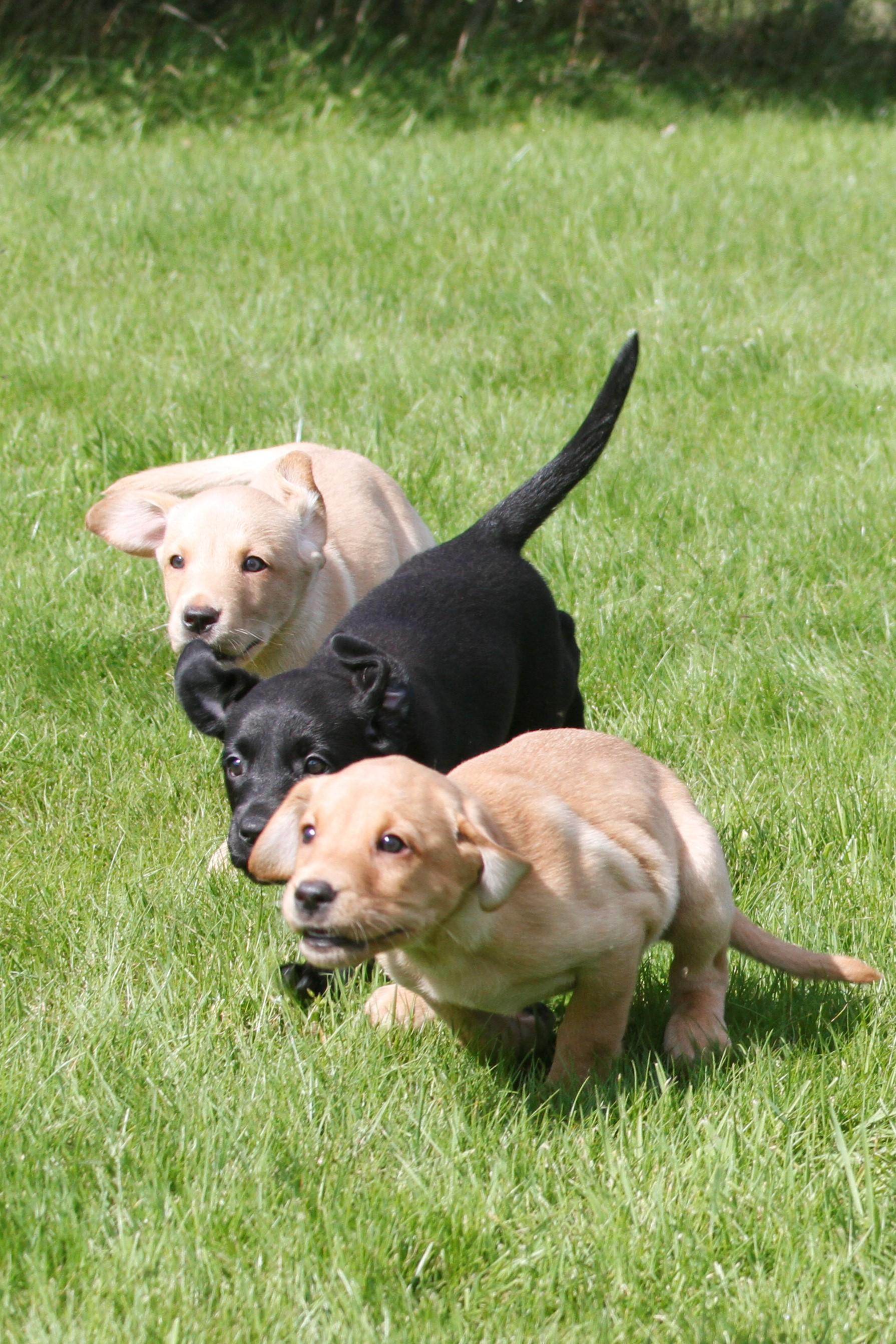 Dogs | slipperfieldcroft