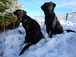 Inca on left with sister Pippa