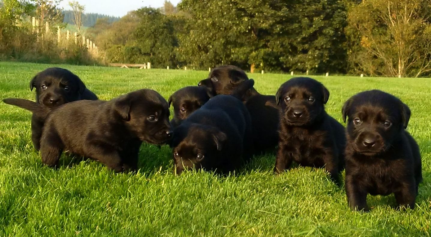 Isla's first litter