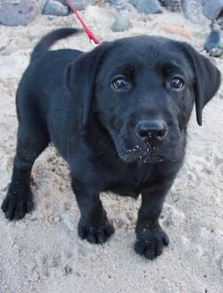 Isla as a puppy