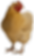chicken-transparent-background.png