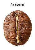 robusta-coffee-bean.jpg