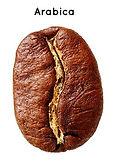arabica-coffee-bean.jpg