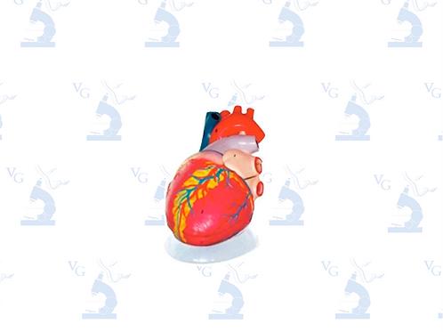 Modelo Corazón