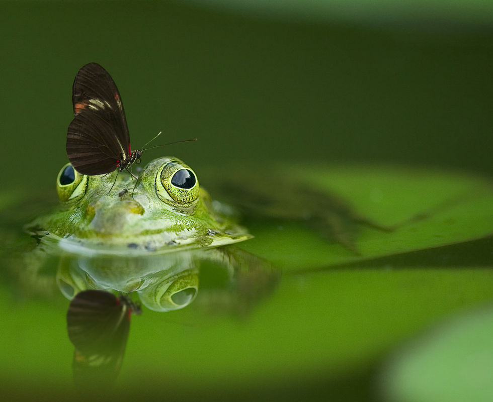 frog-540812.jpg