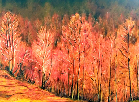 Exposición Fuego de nuestros bosques