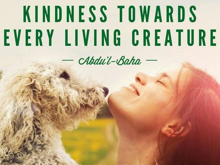 43. The Importance of Teaching Children about Kindness to Animals