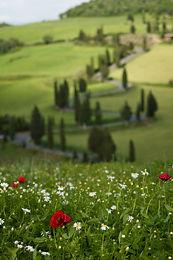 Tuscan Sun opener.jpg