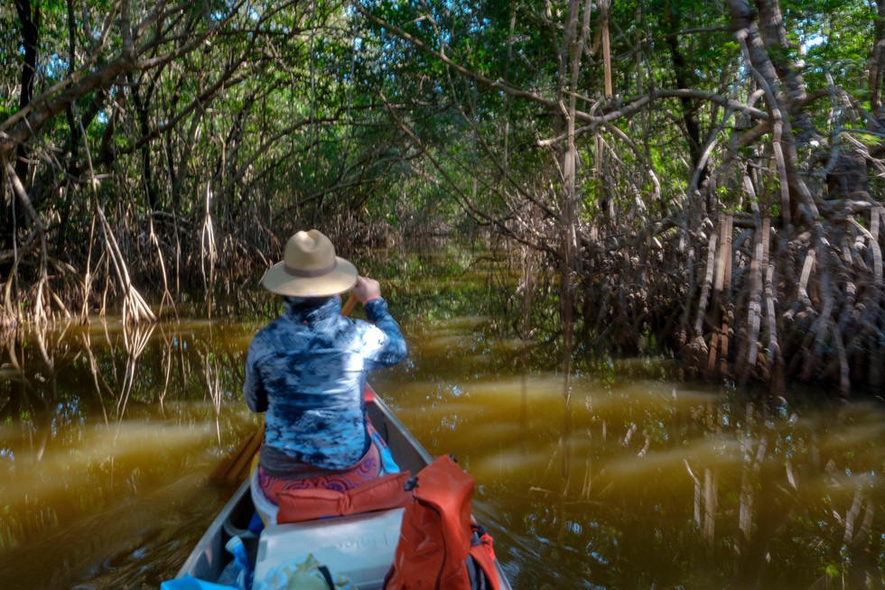 Paddling in Mangrove Tunnels
