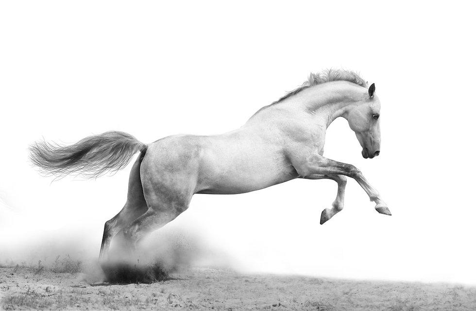 pferdetraining niederösterreich
