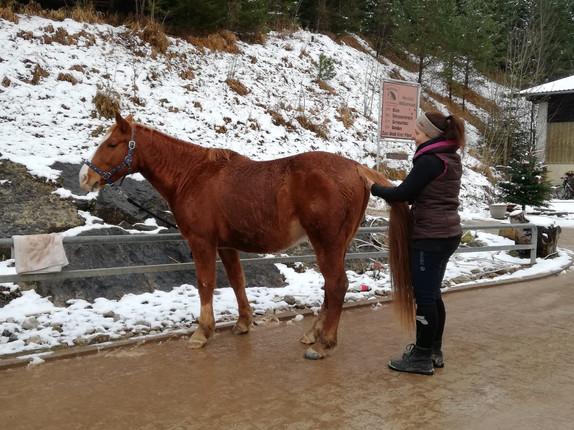 pferd-körperarbeit.JPG