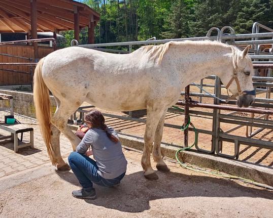 körperarbeit-entspanntes-pferd