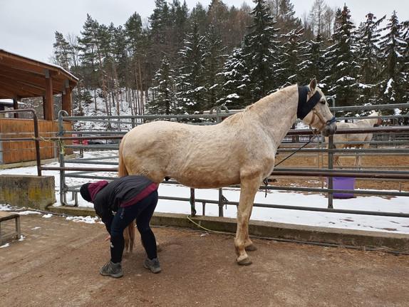 körperband-pferd.JPG
