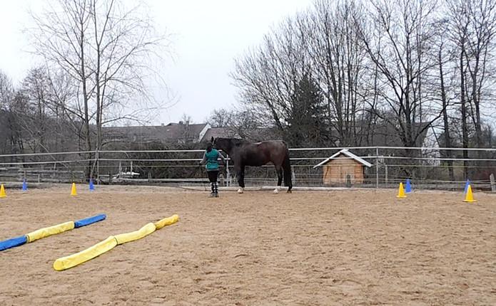 handarbeit-pferd-niederoesterreich.jpg