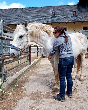 pferde-massage-wien.jpg